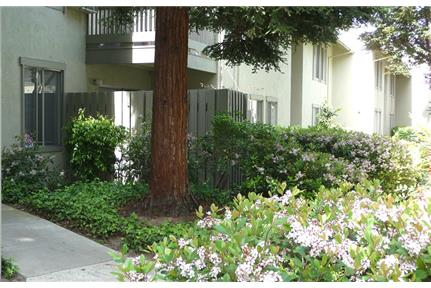 $2295 / 2br / 2ba Cat friendly, condo in Walnut Cr for rent in Walnut Creek, CA